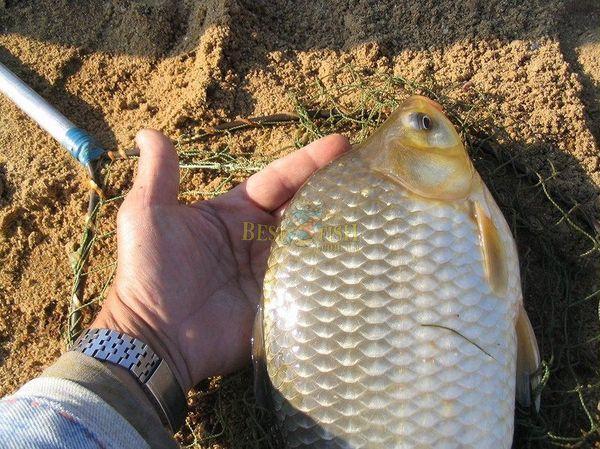 какая рыба клюет на пенопласт
